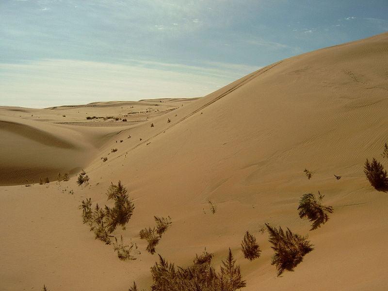Место рождения пандемии чумы — пустыня Гоби