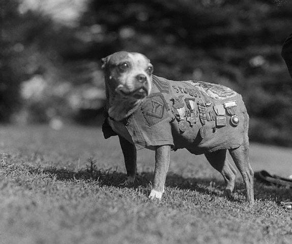 Сержант Стабби — неизвестный герой Первой мировой войны